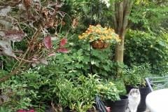 41.Garden-with-Fluffy